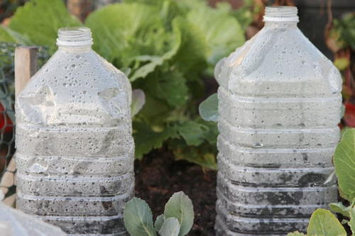 DIY Bottle Greenhouses