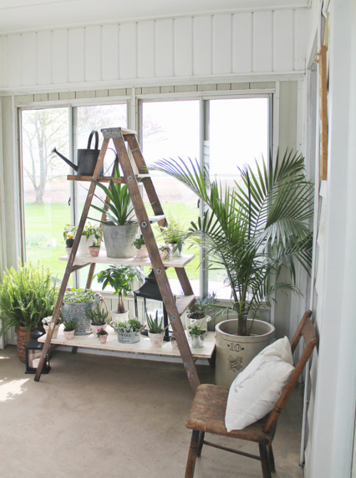 Antique Ladder DIY Shelves