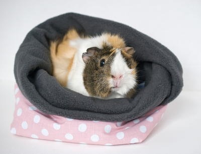 Guinea Pig Cuddle Cup Pattern