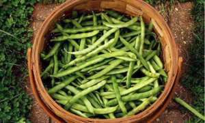 How to Grow Beans