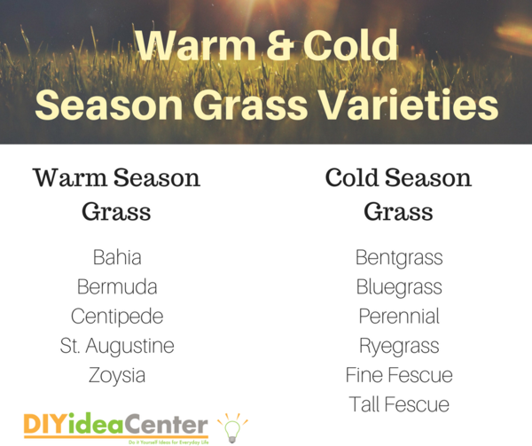 Warm and Cold Season Grass Varieties