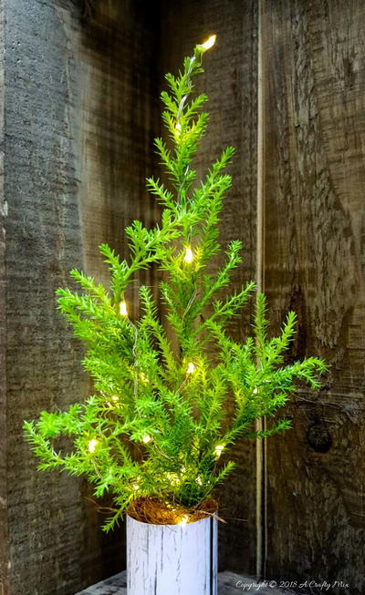 How to Make Real Tabletop Christmas Trees With Lights