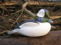 A Bufflehead Tweener, Part One: Carving