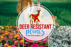 Deer Resistant Plants For Your Garden