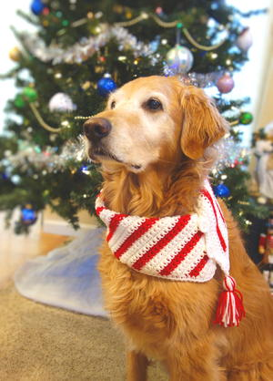 Crochet Christmas Candy Cane Dog Scarf