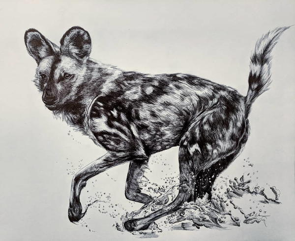 The majestic African Wild Dog aka Painted Hunting Dog. Drawn in ballpoint pen.