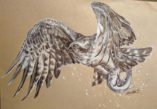 An osprey catching a fish. Drawn in ballpoint pen.