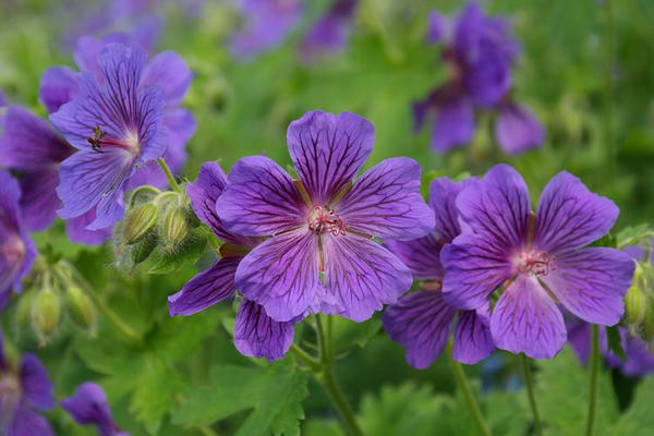 Perennials that Bloom All Summer