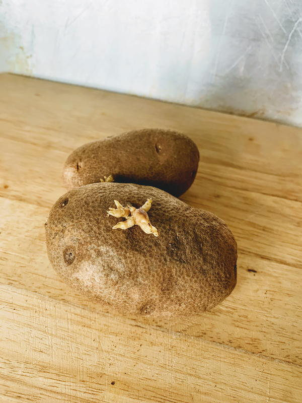 Sprouted potatoes can still be eaten. Just cut off the sprout and cook.