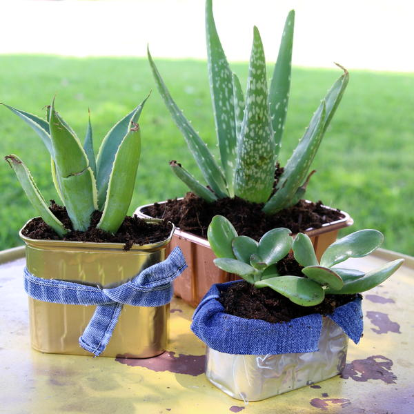 Succulent Planters Made From Recycled Food Containers