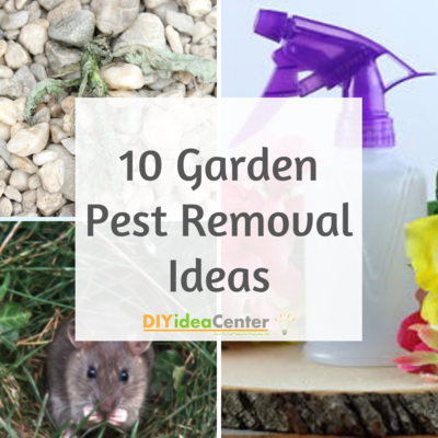 10 Garden Pest Removal Ideas