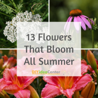 13 Flowers That Bloom All Summer
