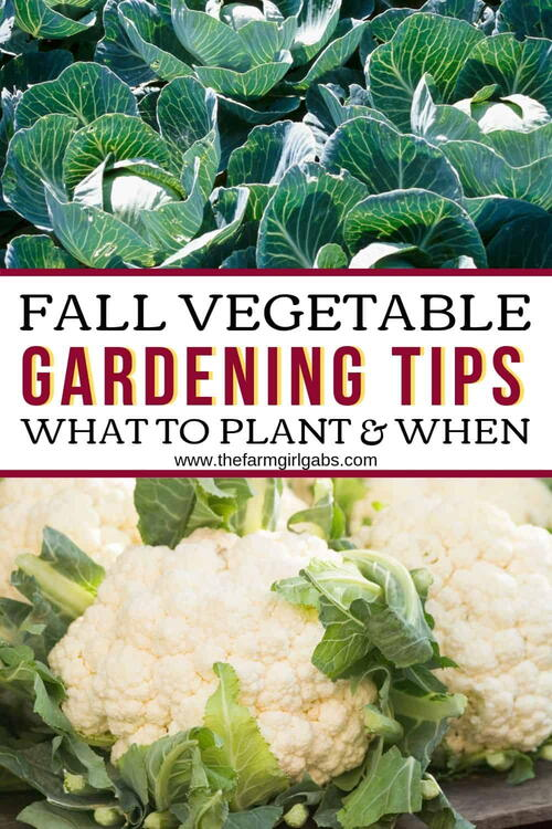 Fall Vegetable Gardening Tips