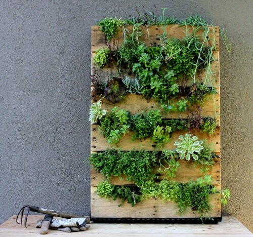 Easy Vertical Succulent Garden From A Wood Pallet