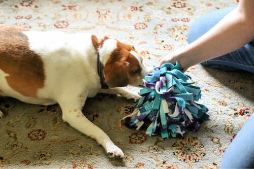 Diy Snuffle Ball For Dogs