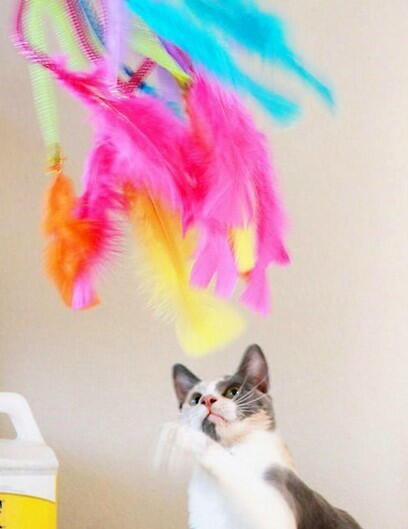 Vibrant Feathers DIY Cat Toys