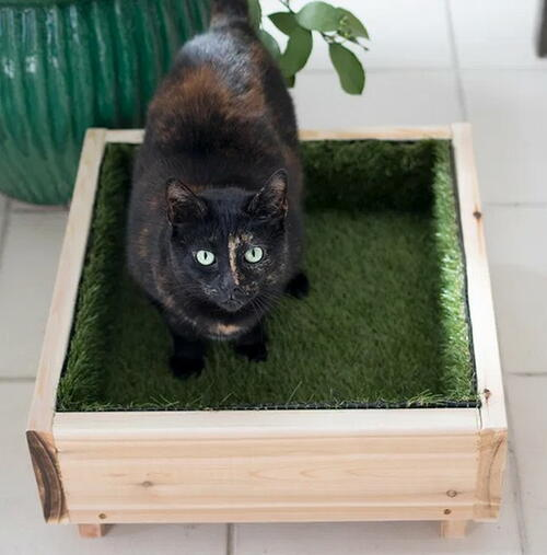 Cute Cat Grass DIY Pet Bed