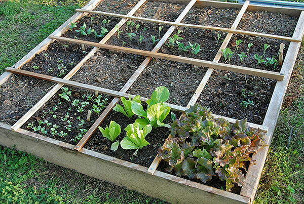 Steps to Square Foot Gardening